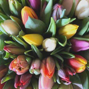 Gemengde tulpen uit assortiment webshop