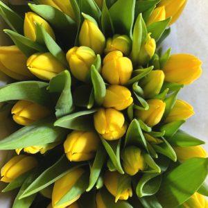 Gele tulpen uit assortiment webshop