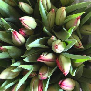 Rode tulpen uit assortiment webshop